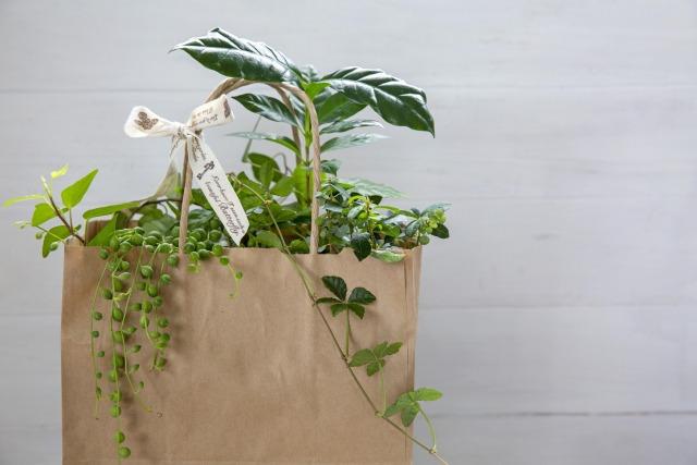 観葉植物が入った紙袋